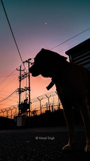 Silhouette of horse against sunset sky