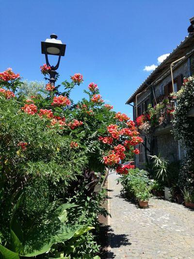Red flowering plant by street against sky