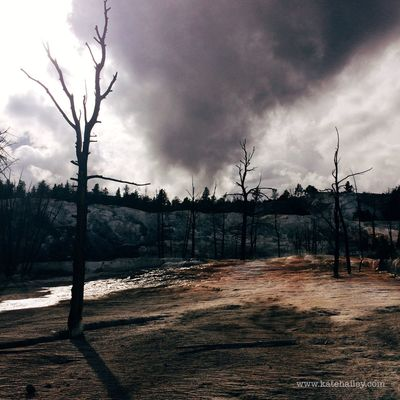Trees and sulfur. Mammoth at Yellowstone National Park. Travel On The Road VSCO Kateontheroad