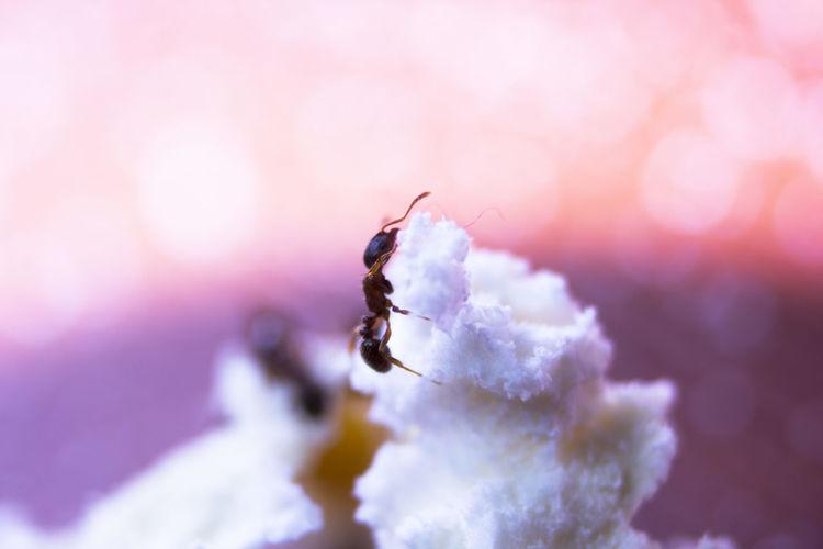 ant climbing