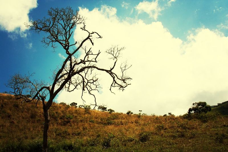 Tree Nature Senhora Do Carmo