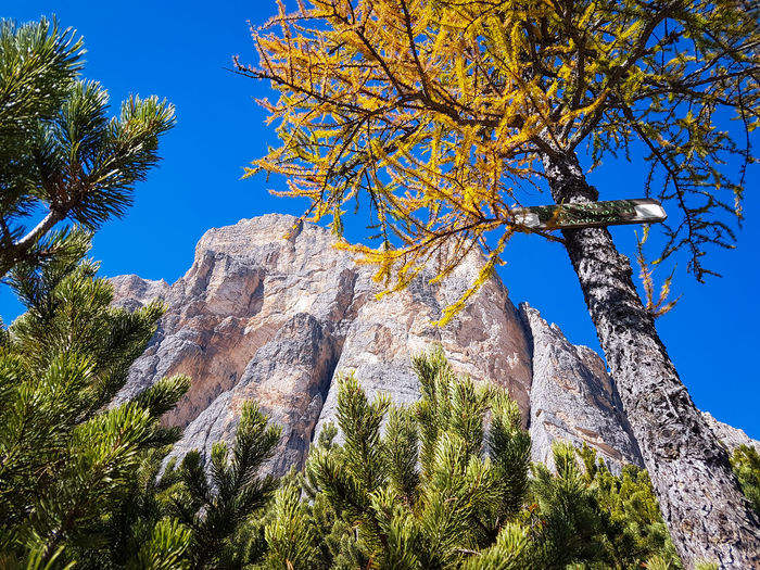 Autumn colours in the Dolomites, Italy mountain mountain range mountains Autumn Autumn colors Larch Tree Mountain Mountain Range Mountains Autumn Tree Branch Blue Sky Close-up Plant Treetop Tree Area Evergreen Tree Coniferous Tree Pine Wood WoodLand Spruce Tree Pine Woodland Directly Below Pine Tree Pinaceae