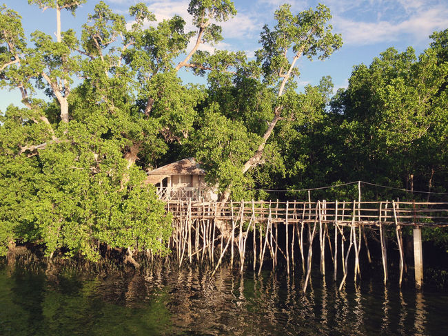 Holiday Island Life Philippines Siquijor Island Travel Traveling Vacations Wanderlust Animal Themes Beauty In Nature Day Explore Forest Growth Island Itsmorefuninthephilippines Lake Mammal Nature No People Outdoors Siquijor Sky Travel Destinations Tree Water