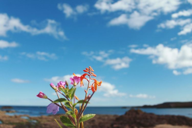 Close-up of flowering plant by sea against sky