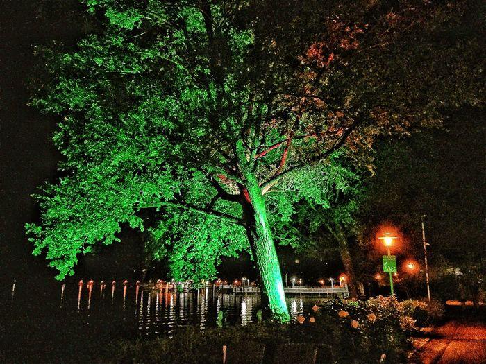 Tree Night First Eyeem Photo