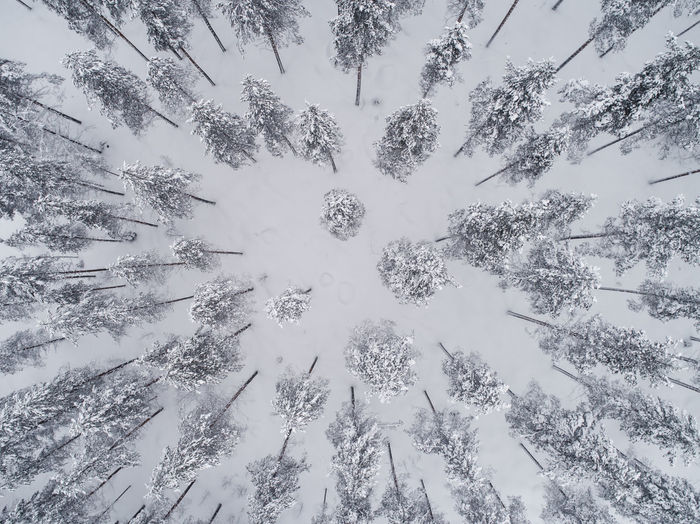 Aerial view of snowy pine forest seen directly above. Photographed in Nurmes, Finland. Winter Snow Aerial Aerial View Aerial Shot Aerial Photography Dronephotography Drone Photography White Texture Textured  Droneshot Beauty In Nature Nature Natural Boreal Forest Taiga Forest Boreal Pine Trees No People Pattern Tree Day Outdoors Shades Of Winter