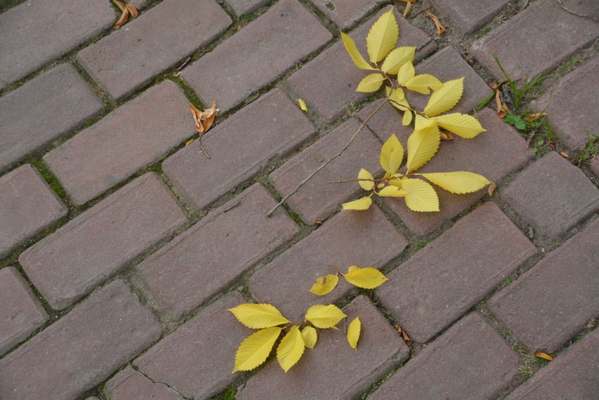 Beauty In Nature Change City Cobblestone Concrete Day Flower Flowering Plant Footpath Fragility High Angle View Leaf Leaves Nature No People Outdoors Paving Stone Plant Plant Part Stone Street Vulnerability  Yellow