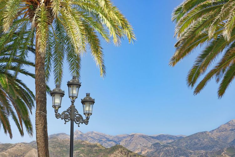 mountains, streetlight and palms Palm Tree Tropical Climate Streetlight Lightning Equipment Sky Mountain Mountain Range Nature No People Day Tranquility Clear Sky Blue Outdoors Palm Leaf Tropical Tree