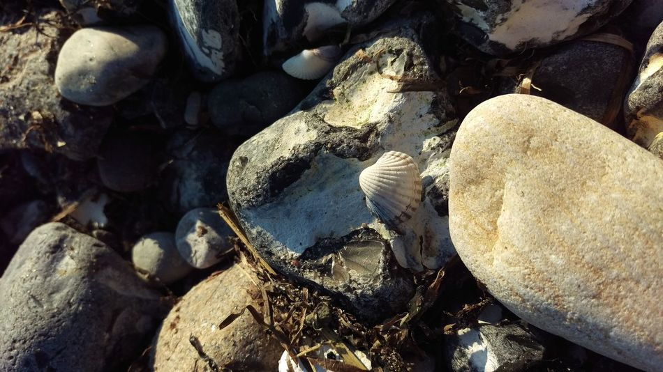 Beachphotography Beach Photography Stones Shells Beautiful Beautiful Nature Beachlovers Stone Shell Beach Full Frame Rock - Object No People Nature Backgrounds Outdoors Day Beauty In Nature