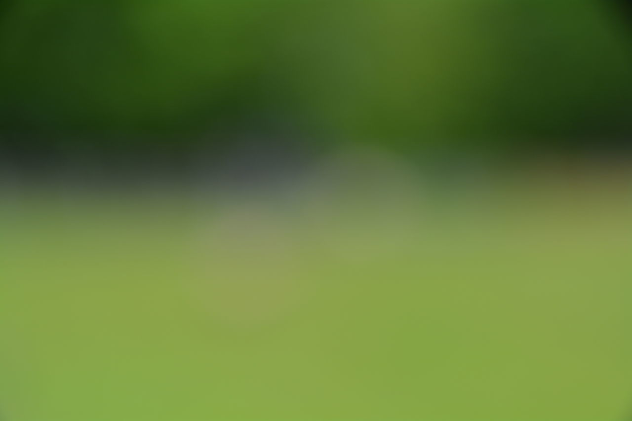backgrounds, no people, nature, green color, defocused, outdoors, day, beauty in nature, close-up