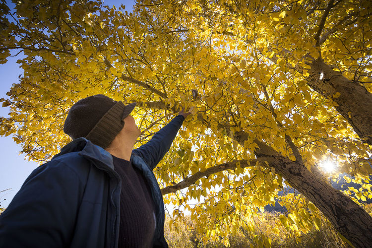 Fall Cottonwood colors near Convict Lake. Tree One Person Autumn Plant Nature Men Real People Clothing Change Day Low Angle View Rear View Plant Part Leaf Outdoors Lifestyles Leisure Activity Standing Branch Warm Clothing Arms Raised Woman Girl Yellow