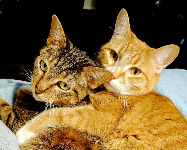 Happy National Love Your Pet Day! Pets Cats Furballs Bestfriends My Pets Home