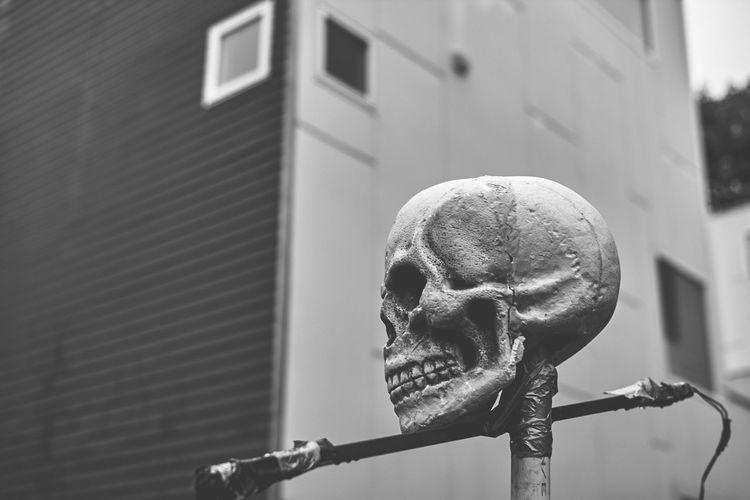 Halloween Profile Blackandwhite Close-up Decoration No People Skull,
