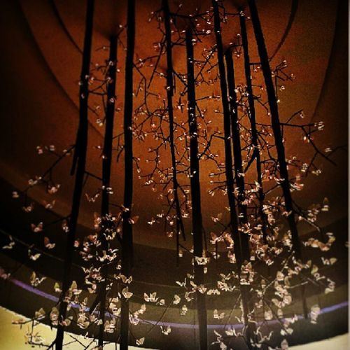 Lights and butterflies Lightology Wilmall Chandelier Lifestyle