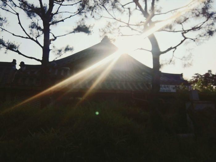 전주 한옥 빛 소나무
