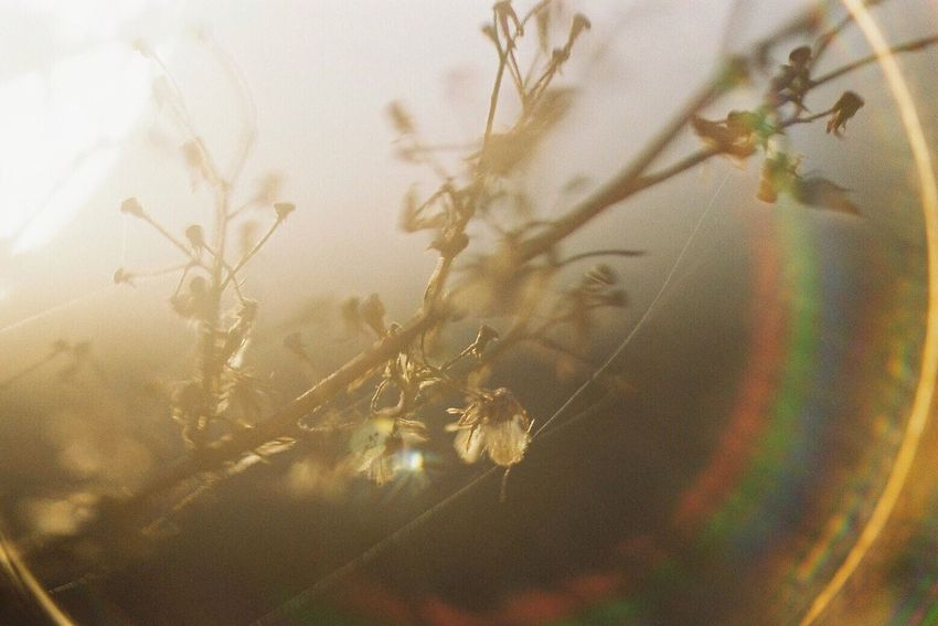 Film Filmcamera Film Photography 35mm Film Filmisnotdead Pentax Pentax Super-a Fujifilm Nature Nature_collection Plants Sunlight Lens Flare フィルム レンズフレア