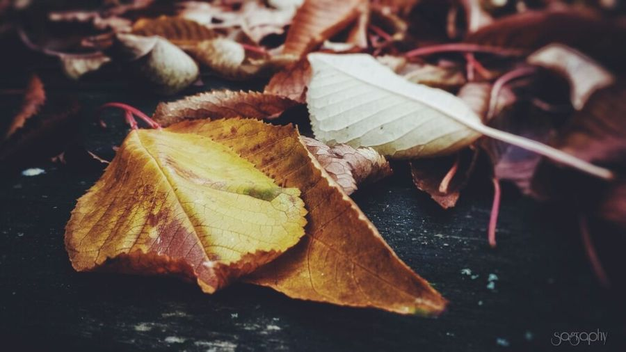 Leaves, leaves, leaves. 🍁🍂🍃 Leaf Autumn Beauty In Nature Outdoors Nature Photo Of The Day Leaves Autumn Nature Orange Color Contrast Season  Nature Photography EyeEm Best Shots - Nature Fallen Leaf Leaves Only Leaves EyeEm Best Edits Fall Collection Natural Condition Fallweather Leafphotography Contrasts Focus On Foreground