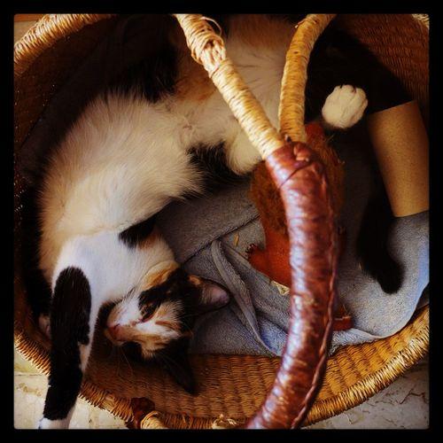 Gaia Cat
