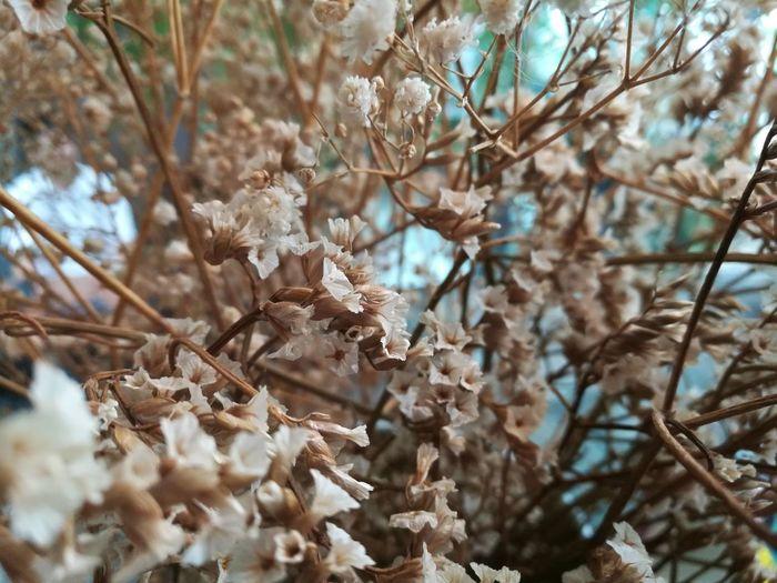 Flower Tree Flower Branch Beauty Springtime Thick Winter Close-up Sky