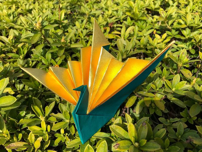 Origami Tsuru Growth Plant Part Leaf Plant Beauty In Nature Green Color Nature Close-up
