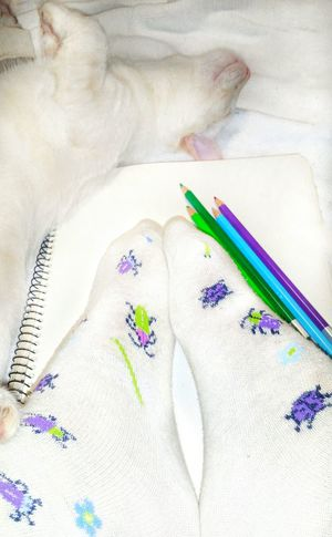 TK Maxx Socksie Ladybugs Bugs Soft Texture Cute Socks Foot Pattern Lazy Cat Funny Cat Insects  Comfortable Clothing Desaturated Colored Pencil Animal Its Me Warm Clothing Drawing Bright Colors Drawing - Activity Cozy Cat Lovers Cat Insects  Sketch Pad