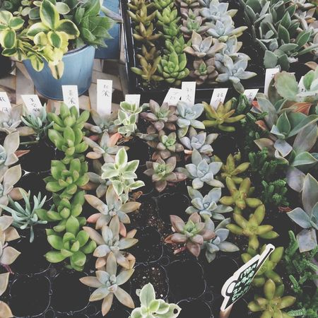 ♡ Succulents Green My Favorite Place Check This Out