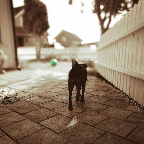 Dog walking outdoors