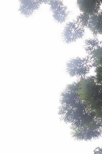 Leaves look