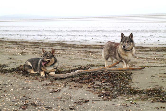 EyeEm Selects Sea Beach Animal Themes Domestic Animals Pets Mammal Dog Dogs Playing