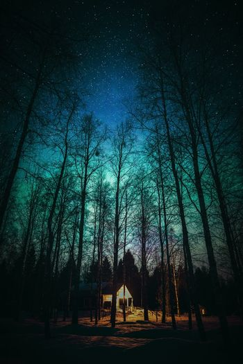 A million star cottage Tree Forest Plant Land Beauty In Nature Night Nature Sky Tranquility Tranquil Scene Tree Trunk Trunk Scenics - Nature Silhouette Outdoors No People WoodLand Non-urban Scene Bare Tree Cottage Cottage Life Lapland Finland Vingette Atmospheric Mood Atmosphere Scenery Explore Moody Building Woods Star - Space Astronomy Landscape Landscape_photography Nightphotography Nature_collection Nature Photography Photography Northern Lights Aurora Borealis Light And Shadow Scenics Scene Green Color Blue Clear Sky Freshness Hanging Out Lifestyles