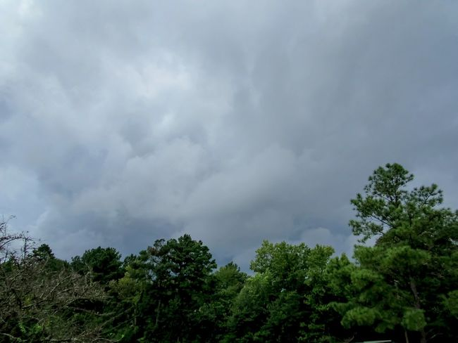 Tropical Storm Harvey Storm Clouds Tornado Weather Nature Tree Low Angle View Storm Cloud Forest Outdoors Beauty In Nature Weather Rain Clouds Hurricane Tropical Climate Tropical Storm Harvey No People Sky Clouds And Sky Tree Line Mississippi  Day Weather Photography