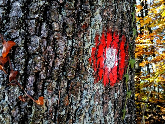 Full Frame No People Close-up Red Outdoors Day Backgrounds Tree Sign Tree Planing Red Red White Round Autumn Wood Sky And Trees Forest Photography Landscape Art Artistic View Beauty In Nature Plant Tranquil Scene