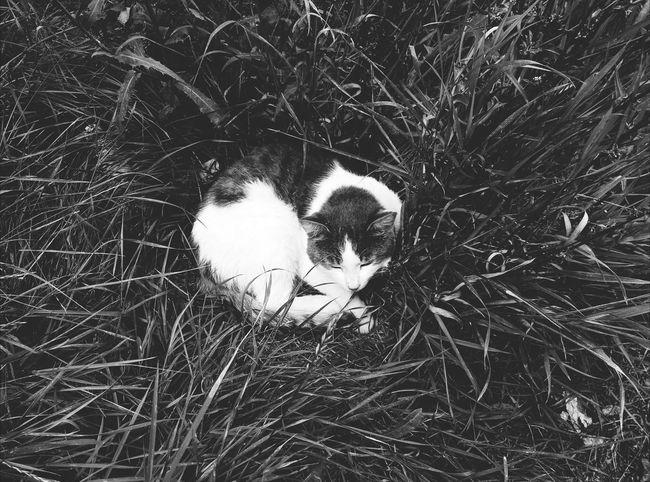 Cat Blackandwhite Black & White Streetphoto_bw