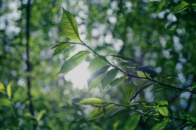 Beauty In Nature Green Color Outdoors Tree Area Nature Fragility Tranquility Tranquil Scene Relaxing Nature Lover My Freedom Great Outdoors From My Point Of View Eyeem Photo In Forest By Ivan Maximov Our Best Pics Leaf Tree Forest Belarus Nature Sunshine Sunrise