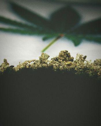 Pot Marijuana Weed Smoke CBD Herb Erva Maconha Cannabis Thc No People Window Day Nature Close-up Outdoors Water Sky