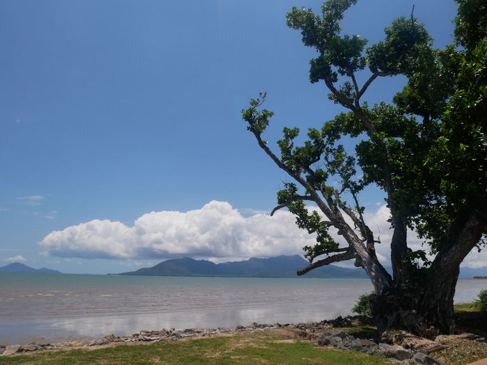 Sky Water Beauty In Nature Tree Plant Tranquil Scene Scenics - Nature Tranquility Nature Day Cloud - Sky No People Sea Beach Growth Land Blue Outdoors Tree Tree Trunk Trees Beauty In Nature Paradise