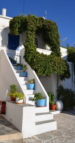 Ivy covering the façade of a house Colorful Life Community Façade Flower Freshness Front Yard Green Color Growing Growth Ivy Kimolos No Edit/no Filter No Filter No People Outdoors Plant Potted Plant Residential District Stairs Traditional House Urban Village Village Life Blue Wave