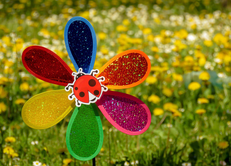 Decorative and colorful pinwheel spinner windmills with a ladybug in the middle and grass with flowers in background. Chilhood Fun Grass Green Holiday Ladybug Red Summertime Air Blie Blowing Blue Child Flower Motion Object Party Plastic Propeller Rotate Summer Toration Toy Ventilator Yellow