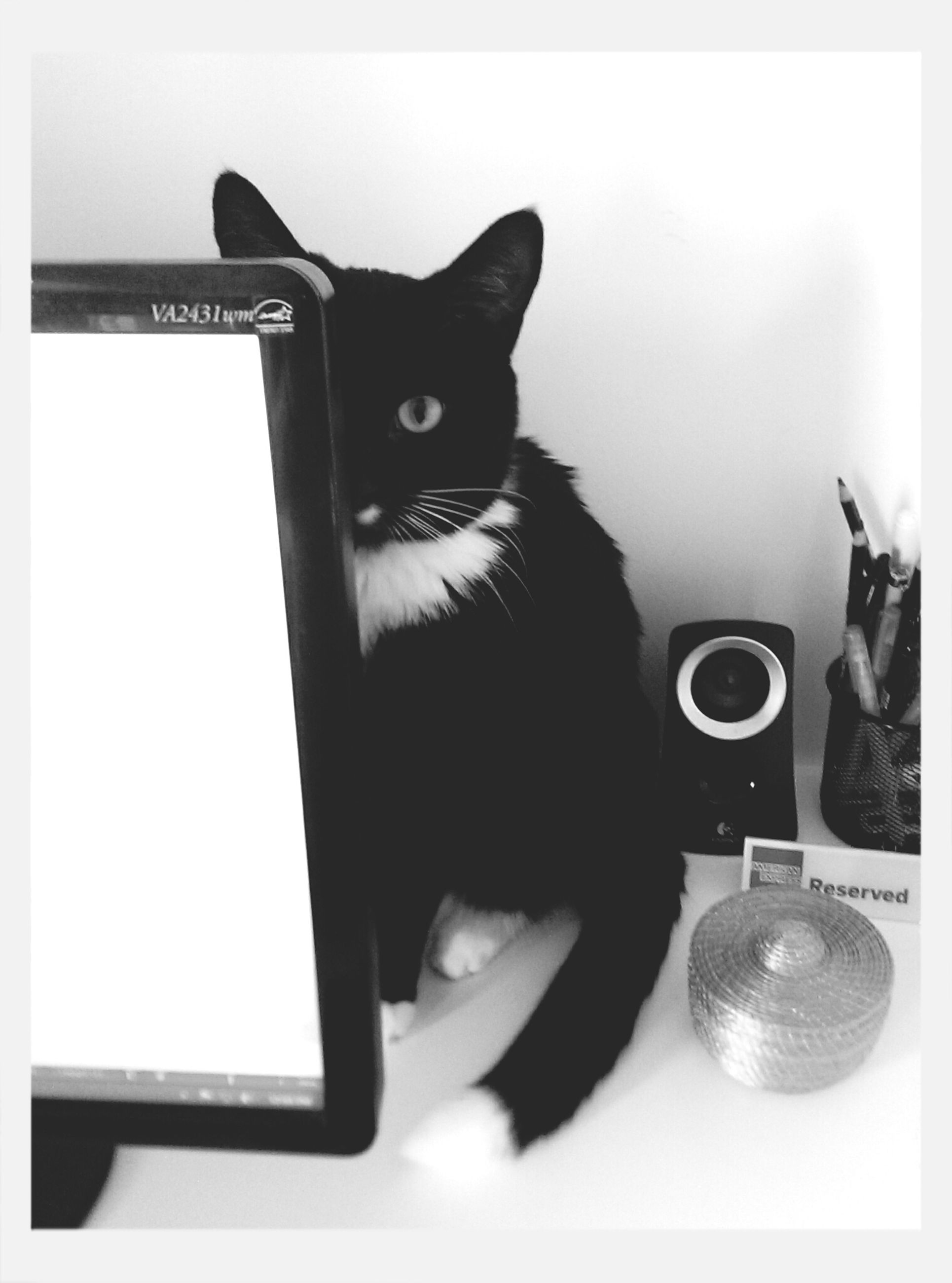 transfer print, domestic cat, indoors, cat, one animal, animal themes, pets, domestic animals, auto post production filter, feline, mammal, looking at camera, close-up, black color, portrait, whisker, alertness, front view, no people, home interior