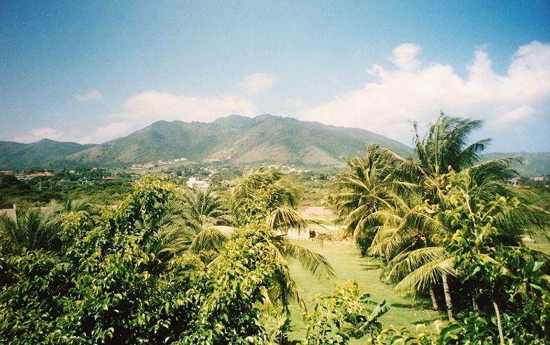Isola Margherita Isla Margarita Venezuela 🇻🇪 Nature Green Color EyeEm Nature Lover EyeEm Best Shots Naturelovers