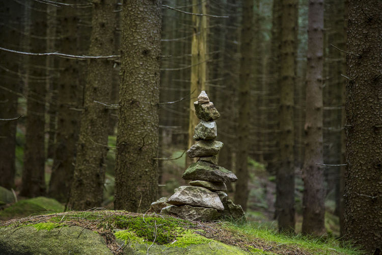Stones stacked on mossy rock in forest