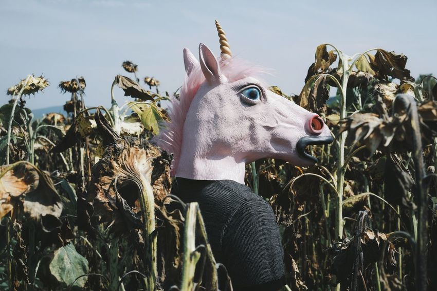 Nature Non-urban Scene Sunflower Sunflower Field Dried Dried Sunflowers Unicorn Unicorn Head People One Person One Man Only Men Sky Close-up Growing