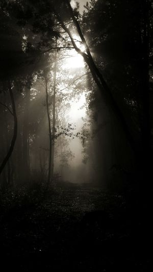 Sun Light Fog