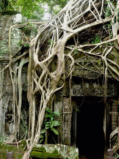 Cambodia Siem Reap Ankor Wat Ruins