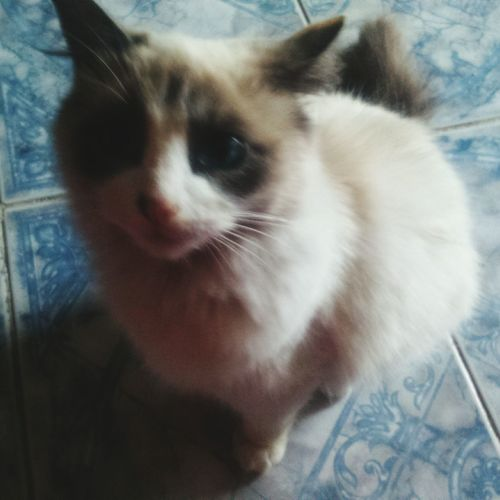 Cats Gatita  Animals