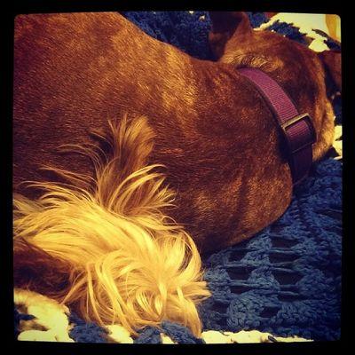Sleepingbeauty Bedtime Puppies Bri  Reggie myloves