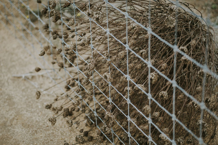 No People Focus On Foreground Outdoors Plant Trapped Growth Dry Fence