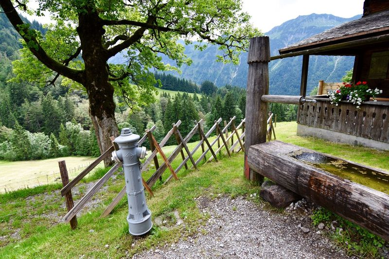 Home Is Where The Art Is Check This Out Taking Photos On The Way Check This Out! Taking Photos Oberstdorf & Umgebung Oberstdorf Allgaeu Oberstdorf Allgäu Allgäuer Alpen Allgäu EyeEm Nature Lover Flowers, Nature And Beauty Check This Out Hydrant New Vs Old