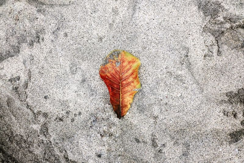 Colorful Leaves Sand Colors Red Yellow Beach White Sand Beach Bali