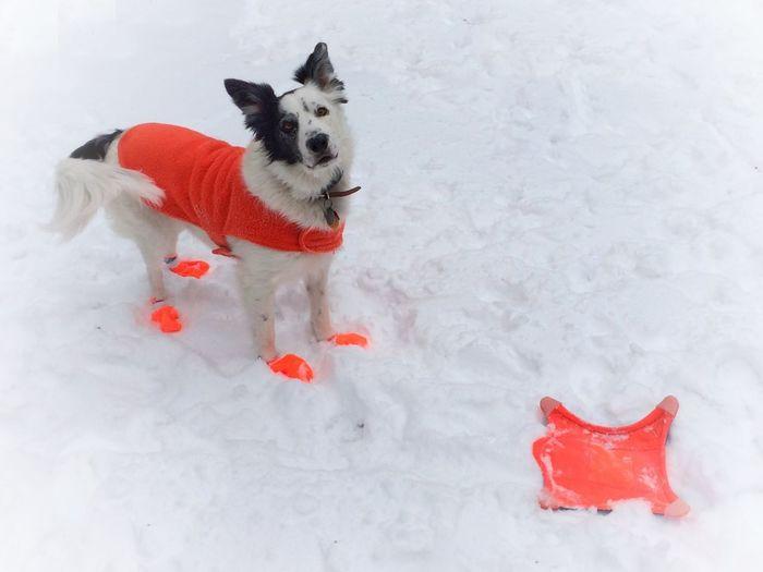IPSWeather Dogs Wintertime Snow Play My Winter Favorites IPS2016Winter IPS2016White
